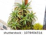 nice green flower | Shutterstock . vector #1078406516