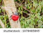 closeup of a plastic ladybug... | Shutterstock . vector #1078485845
