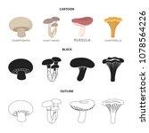 champignon  honey  agarics ...   Shutterstock .eps vector #1078564226