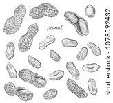 peanut hand drawn illustration. ... | Shutterstock .eps vector #1078592432