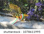 Small photo of Mezzegra, Como, Lombardy / Italy - October 07 2015: Flowers on the place where Benito Mussolini and Claretta Petacci were shot dead.
