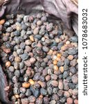 Small photo of argan in Morocco, argan seeds to make oil and skin products