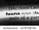 fauna word in a dictionary.... | Shutterstock . vector #1078708736