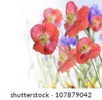 Red Poppy And Wild Flowers For Background - stock photo