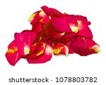Stock photo red rose petals on white background 1078803782
