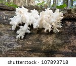 Beautiful Coral Spine Fungus ...