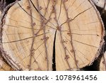 background of firewood  wood... | Shutterstock . vector #1078961456