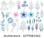 set of assorted botanical... | Shutterstock .eps vector #1079081462