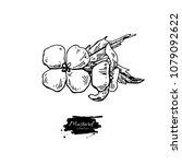 mustard plant branch vector... | Shutterstock .eps vector #1079092622
