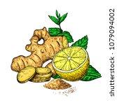 ginger  lemon and mint vector... | Shutterstock .eps vector #1079094002