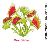 vector drawing of venus flytrap ... | Shutterstock .eps vector #1079094788