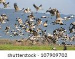 Cranes  Flight  Valley  Hula ...