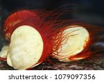 electric flame scallop or rough ... | Shutterstock . vector #1079097356