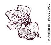 sliced beet hand drawn vector | Shutterstock .eps vector #1079164922