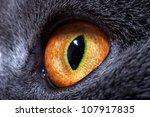 The Yellow Cat\'s Eye Macro