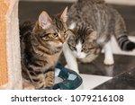 portrait of european type cat... | Shutterstock . vector #1079216108
