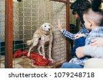 happy family at animal shelter... | Shutterstock . vector #1079248718