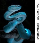 Small photo of Venomous Viper Snake - Reptile/Snake Photo Series