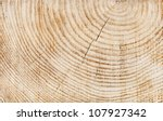 Wooden Texture Of A Tree Trunk