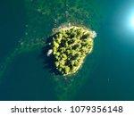 pacific northwest evergreen... | Shutterstock . vector #1079356148