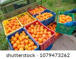 colored fruit boxes full of... | Shutterstock . vector #1079473262