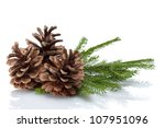 Pine Cones And Needles  Close Up