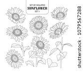 set of isolated sunflower set 1....   Shutterstock .eps vector #1079567288