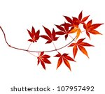 Japanese Red Autumn Maple Tree...