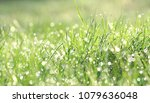 green grass in the dew on a... | Shutterstock . vector #1079636048