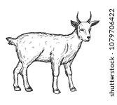 goat farm animal engraving...   Shutterstock .eps vector #1079706422