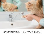a girl washes a cat's paw under ... | Shutterstock . vector #1079741198