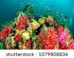 soft coral reef scene | Shutterstock . vector #1079808836