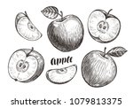 hand drawn apples and slices ... | Shutterstock .eps vector #1079813375