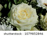 white rose in a bridal bouquet... | Shutterstock . vector #1079852846