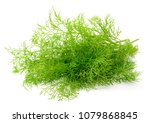 fresh dill weed isolated on... | Shutterstock . vector #1079868845