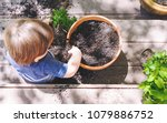 toddler boy helping to plant... | Shutterstock . vector #1079886752