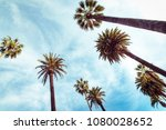 palms at sunny day at blue sky... | Shutterstock . vector #1080028652