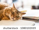 a cat relaxing in the afternoon ... | Shutterstock . vector #1080102035