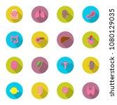 vector icon set of human organs ...   Shutterstock .eps vector #1080129035
