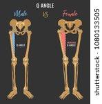 female and male skeleton... | Shutterstock .eps vector #1080133505