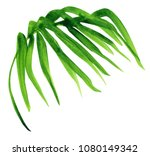 watercolor painting palm leaf ... | Shutterstock . vector #1080149342
