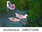 goose swims in a river | Shutterstock . vector #1080172568