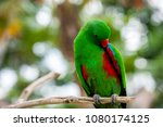 parrot sitting on a branch | Shutterstock . vector #1080174125