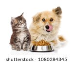 Stock photo kitten and licking lips hungry dog sitting together near bowl of dry food isolated on white 1080284345