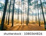 fabulous european forest. ... | Shutterstock . vector #1080364826