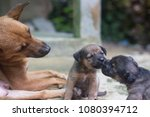 Stock photo mother dog take care puppies with love 1080394712