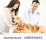 veterinarian checking the dog...   Shutterstock . vector #1080556652
