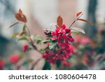red blooms on the tree  street... | Shutterstock . vector #1080604478