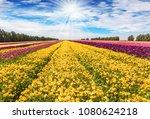 bright spring sun shines...   Shutterstock . vector #1080624218