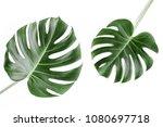 tropical leaves monstera on... | Shutterstock . vector #1080697718